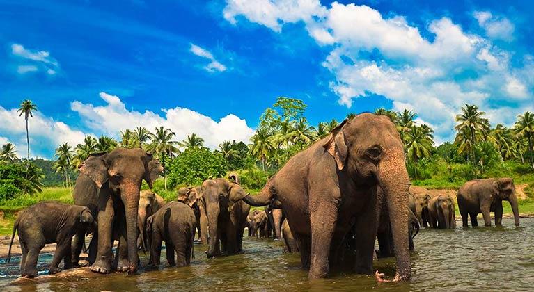 Taste of Sri Lanka
